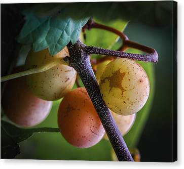 Jamesbarber Canvas Print - Grapes With Color by James Barber
