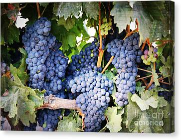 Grape Vines Canvas Print - Grapes With Textures by Carol Groenen
