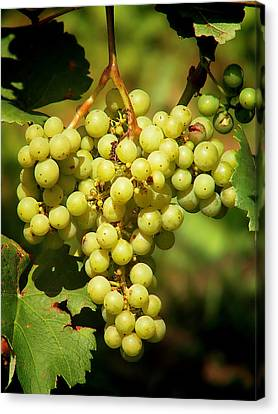 Making Canvas Print - Grapes - Yummy And Healthy by Christine Till