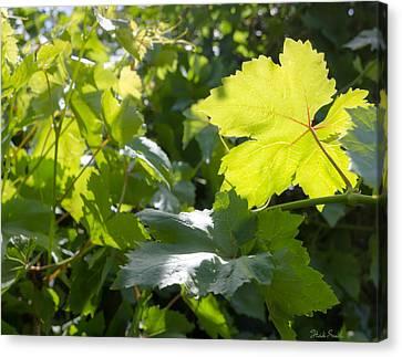 Grapevine Spring Leaves  Canvas Print by Heidi Smith