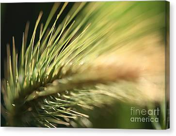 Grass 1 Canvas Print
