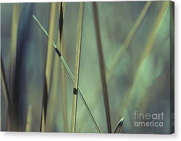 Grass Abstract - 03439gr Canvas Print