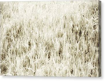Grass Abstract Canvas Print by Elena Elisseeva