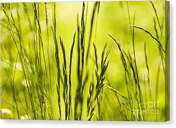 Grass Abstract Canvas Print by Svetlana Sewell