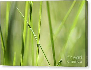 Grass Abstract - Woodie- Green 01 Canvas Print