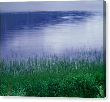 Grass Along A River, Norway Canvas Print