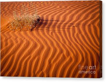 Wavy Canvas Print - Grass And Ripples by Inge Johnsson