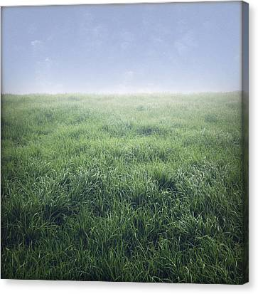 Grass And Sky  Canvas Print by Les Cunliffe