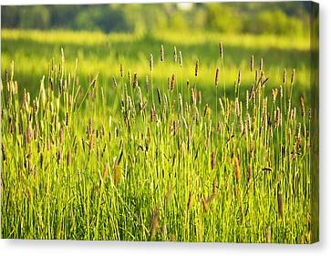 Grass Canvas Print by Belinda Greb