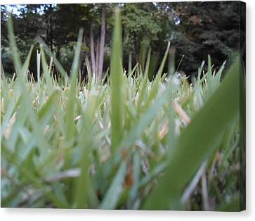 Grass Blades Canvas Print by Jenna Mengersen