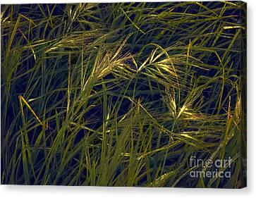 Seed Beads Canvas Print - Grass by Cassandra Buckley