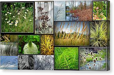 Grass Collage Variety Canvas Print by Tikvah's Hope