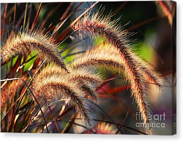 Grass Ears Canvas Print