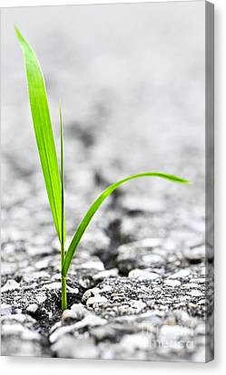 Grass In Asphalt Canvas Print by Elena Elisseeva