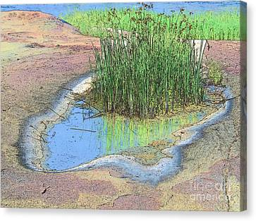 Grass Growing On Rocks Canvas Print