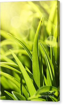 Grass Macro Canvas Print by Mythja  Photography