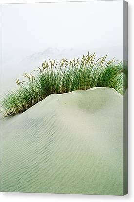 Grass On The Sand Dunes With Fog Canvas Print by Robert L. Potts