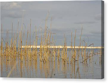 Grass Work Canvas Print by Eugene Bergeron