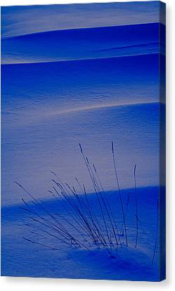 Grasses And Twilight Snow Drifts Canvas Print by Irwin Barrett