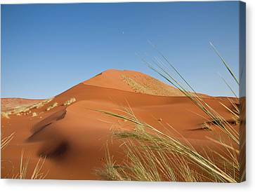 Grasses, Dune, And Setting Moon, Namib Canvas Print by Jaynes Gallery