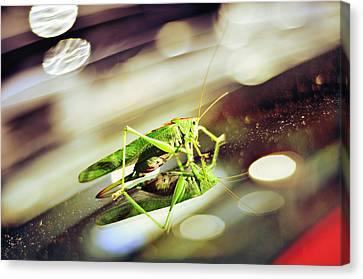 Grasshopper Disco Canvas Print by Gynt