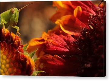 Canvas Print featuring the photograph Grasshopper In The Marigolds by Joel Loftus