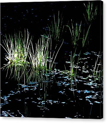 Canvas Print featuring the photograph Grassy Lights by Suzy Piatt