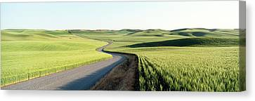Counry Canvas Print - Gravel Road Through Barley And Wheat by Panoramic Images