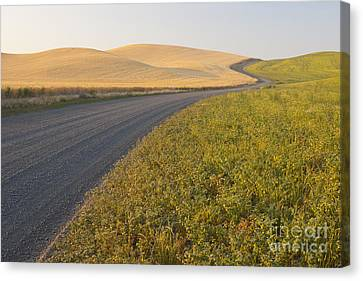 Gravel Road Through Farming Region, Wa Canvas Print