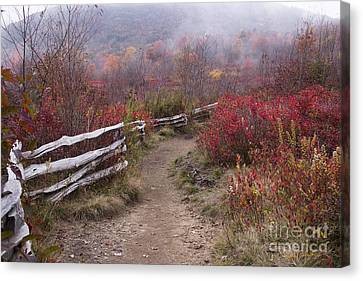 Graveyard Fields 1 - Blue Ridge Parkway 2013 Canvas Print