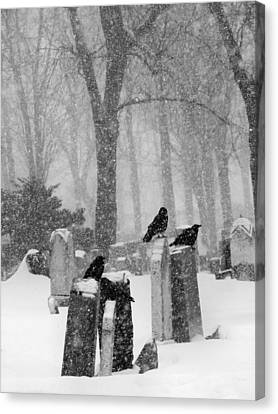 Graveyard Snow With Four Ravens  Canvas Print by Gothicrow Images