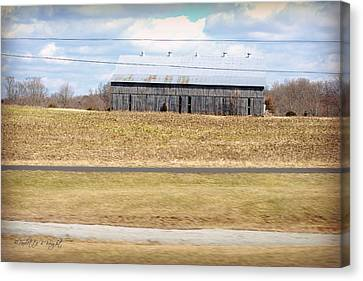 Gray Barn In A Cornfield Canvas Print by Paulette B Wright