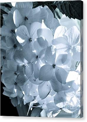 Gray Hydrangea Canvas Print
