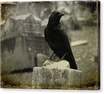 Gray Rainy Day Raven In Graveyard Canvas Print by Gothicrow Images