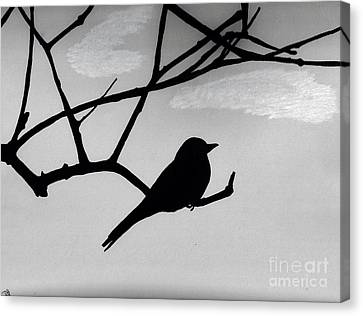Gray - Sky - Flycatcher Canvas Print