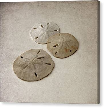 Gray Taupe And Beige Sand Dollars Canvas Print by Brooke T Ryan
