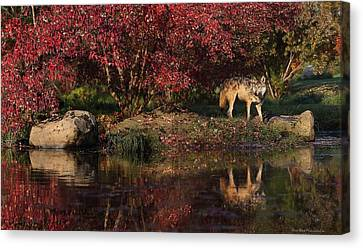 Gray Wolf In Autumn Canvas Print