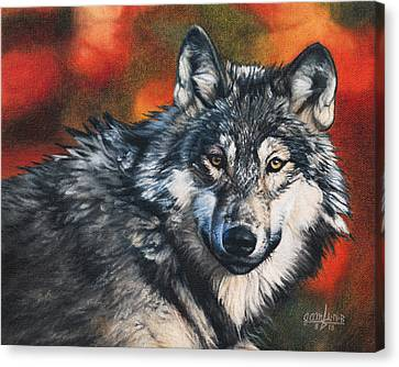 Gray Wolf Canvas Print by Joshua Martin