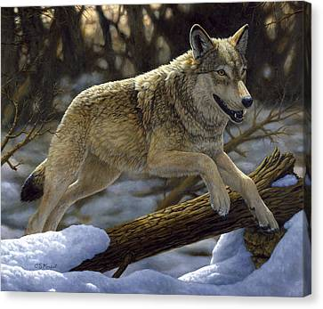 Wild Dogs Canvas Print - Gray Wolf - Just For Fun by Crista Forest
