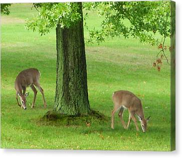 Grazing Canvas Print by Aimee L Maher Photography and Art Visit ALMGallerydotcom