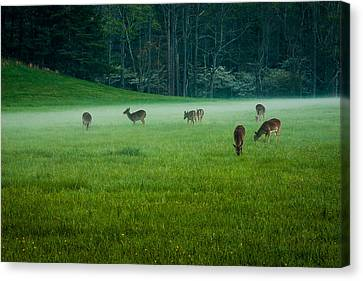 Grazing Deer Canvas Print by Jay Stockhaus