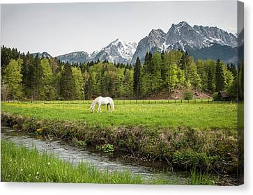 Grazing Horse In Pasture In Bavarian Canvas Print by Sheila Haddad