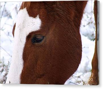 Grazing Horse  Canvas Print by Kimberly Maiden