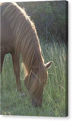 Grazing Horse Canvas Print by Nancy Edwards