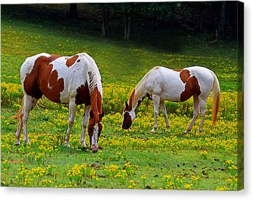 Grazing Horses 001 Canvas Print by George Bostian