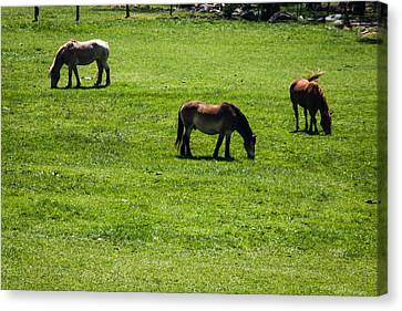 Canvas Print featuring the photograph Grazing Horses by Jay Stockhaus