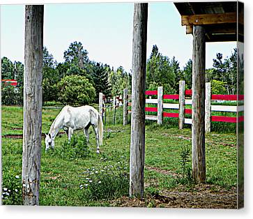 Grazing In The Meadow Canvas Print by Dianne  Lacourciere