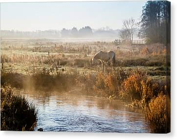 Grazing In The Mist Canvas Print by Odd Jeppesen