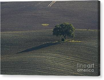 Grazing Land In Andalusia-1 Canvas Print by Heiko Koehrer-Wagner