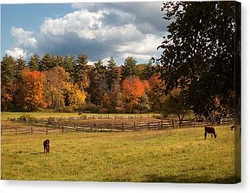 Grazing On The Farm Canvas Print by Joann Vitali